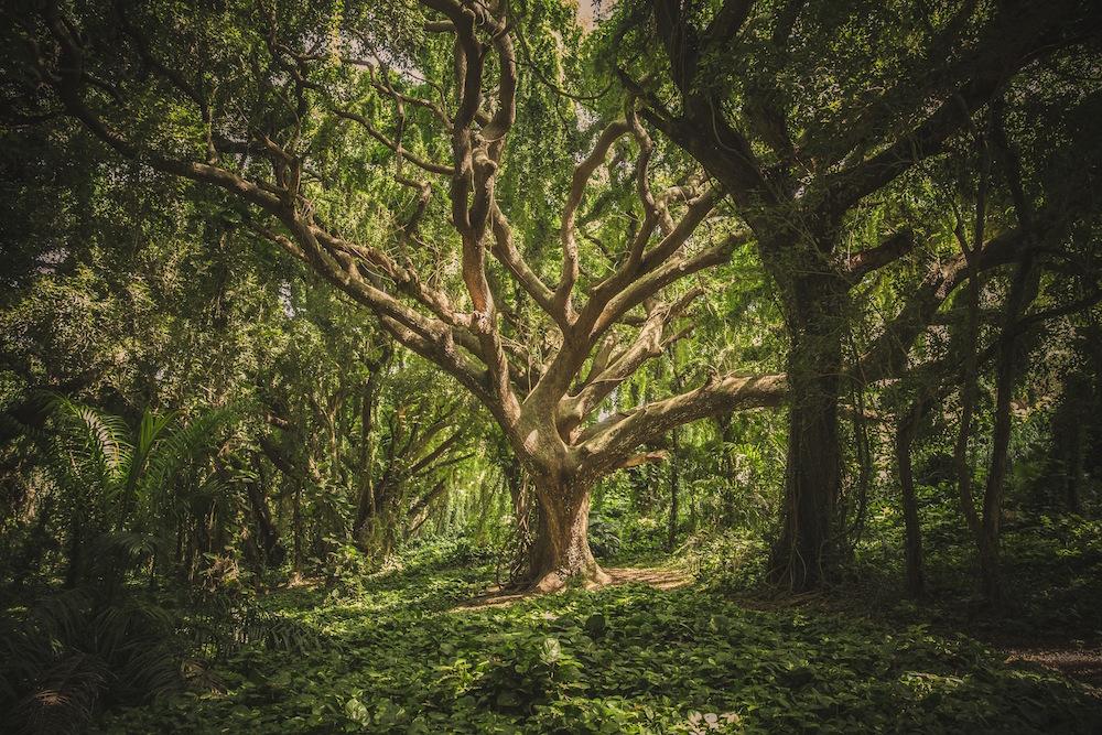 The Yoga Garden Yoga Blog - How to do a proper Tree Pose